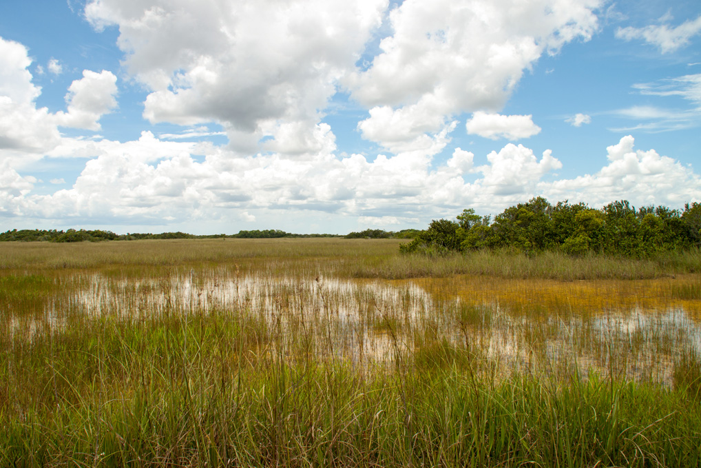 Everglades_Landschaft