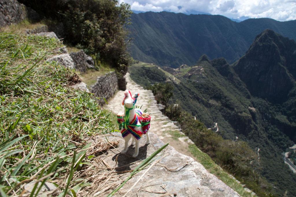 Mit Lama am Sun Gate