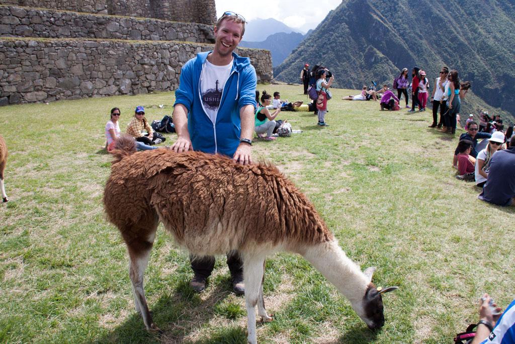Beim Massieren eines peruanischen Lamas :)