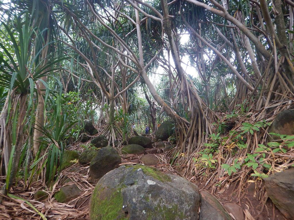 Stellenweise führt der Trail durch dichtesten Urwald