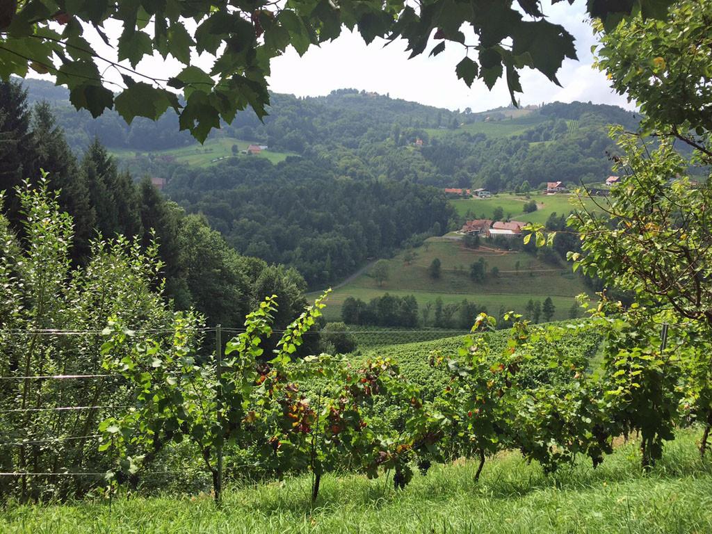 Ausblick beim Startpunkt der Weingartenwanderung.
