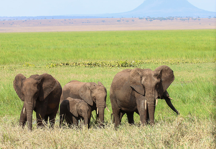 photo credit: Chris Parker2012 Tarangire NP Elephant family via photopin (license)