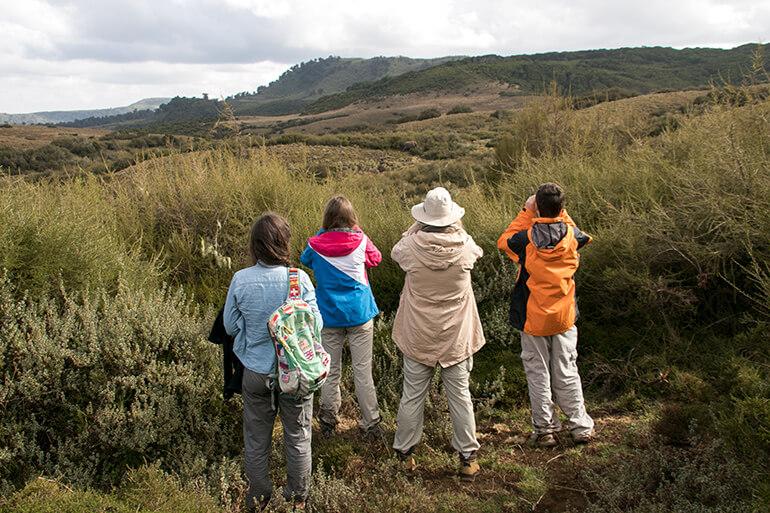 Elefantenbeobachtung in Kenia auf 3000 Meter