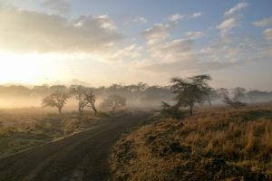 Morgendunst am Lake Nakuro in Kenia
