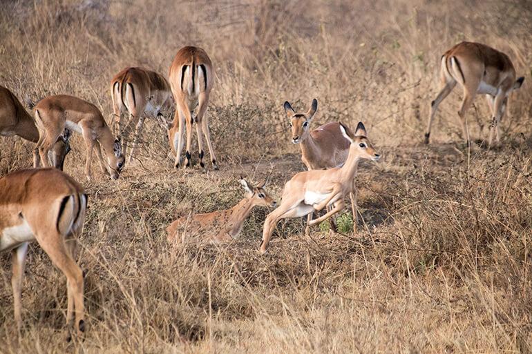 Safari in Kenia mit Toyota Allrad-Van