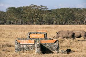 Nashörner im Lake Nakuru Nationalpark