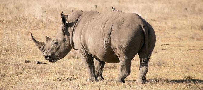 Safari in Kenia: Unsere Tipps für Aberdare und Lake Nakuru Nationalpark