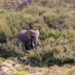 Elefant Aberdare Nationalpark