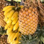 Ananas und Bananen auf Sansibar
