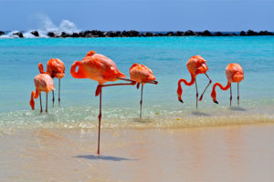 Flamingos am Strand - photo credit: Aruba Tourism Authority