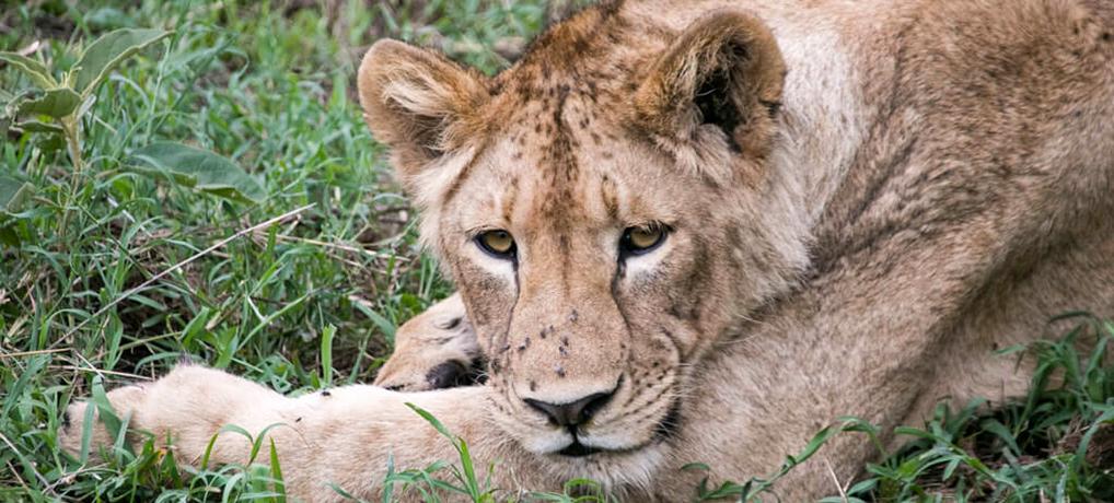 """Ngorongoro Krater in Tansania: Safari im größten """"Zoo"""" der Welt"""