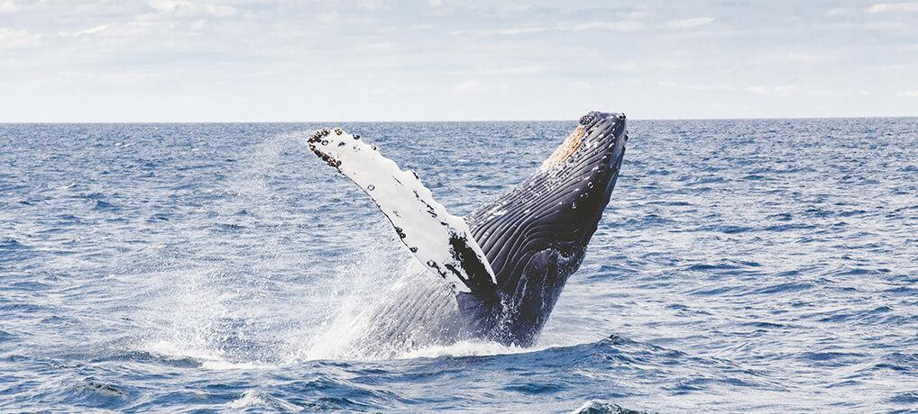Warum meine Reiseträume wie ein Buckelwal sind
