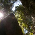Wald im Tsingy de Bemaraha Nationalpark