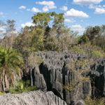 Vegetation im kleinen Tsingy