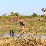 Reisfeld in Madagaskar