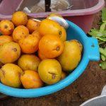 Sakoa Frucht Madagaskar