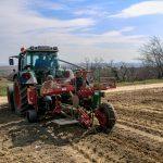 Rebstock setzen mit dem Traktor