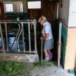 Landwirtin Johanna Krenn kümmert sich einstweilen um die Stallarbeit - und lädt auch ihre Urlaub am Bauernhof Gäste ein, ihr gern dabei zu helfen!