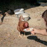 Cori beim Füttern der Hühner