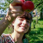 Im Frühherbst tragen die Bäume viele reife Äpfel