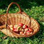 Das Körberl füllt sich rasch mit Äpfel und Nüssen
