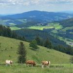 TP_Naturhotel_Bauernhofer_IMG_7527-1200-Facebook