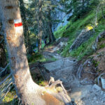 Waldweg zum Gantakopf im Montafon